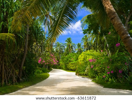 Pathway in tropical park - abstract travel background