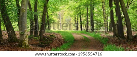 Pathway (natural tunnel) in Veluwe national park, Netherlands. Mighty deciduous beech trees, roots, carpet of golden autumn leaves. Spring forest. Picturesque panoramic scenery. Nature, environment Foto d'archivio ©