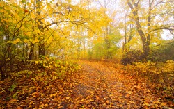Pathway (rural road, alley) in the forest. Deciduous trees with colorful green, yellow, orange, golden leaves. Sunbeams through the branches. Natural tunnel. Autumn, seasons, environment