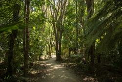 Pathway through dense forest to the Kitekite falls in New Zealand