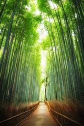 Pathway through the bamboo grove in Arashiyama, Kyoto, Japan
