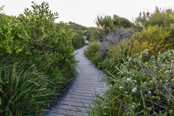 Pathway through the bushes