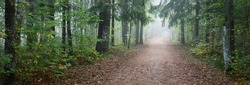 Pathway through the evergreen forest in a mysterious morning fog, natural tunnel of the colorful trees, soft light. Idyllic autumn scene. Nature, ecology, seasons. Atmospheric landscape. Latvia