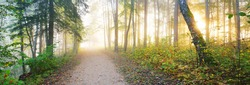 Pathway through the forest in a mysterious morning fog, natural tunnel of the colorful trees, soft light. Idyllic autumn scene. Pure nature, ecology, seasons. Atmospheric landscape. Sigulda, Latvia;