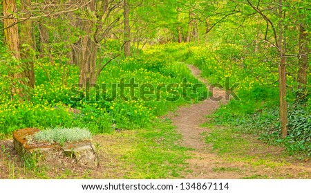 Pathway with flowers in the forest #134867114