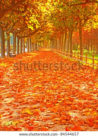 Pathway with nice leaves at autumn, Spain