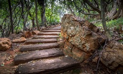 Pathway with rocks and trees