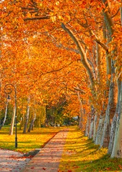 Pathway with trees in autumn in the city