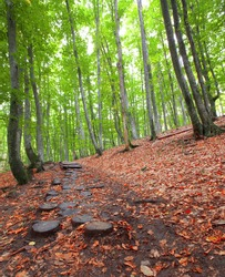 Pathway wooden stairs in summer green mountain forest