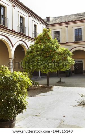 Patio with an orange tree in Cadiz