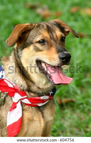 Patriotic dog at a carnival wearing the American flag as a scarf