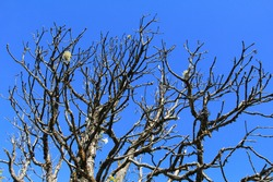 Pattern design photography, the branches of the leafless trees, with deep blue sky background, selective focus point.