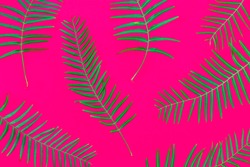 Pattern from fresh green palm fern leaves on solid fuchsia pink background. Tropical botanical floral backdrop. Trendy neon colors. Wallpaper template. Natural cosmetics spa wellness concept.