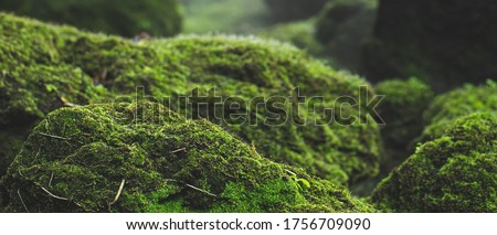 pattern green moss grown up cover the rough stones and on the floor in the forest. Show with macro view. Rocks full of the moss texture in nature for wallpaper.