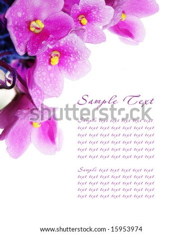 Pattern of a card with blossoming violets