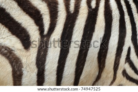 Pattern of a zebra skin background