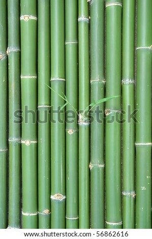 pattern of bamboo