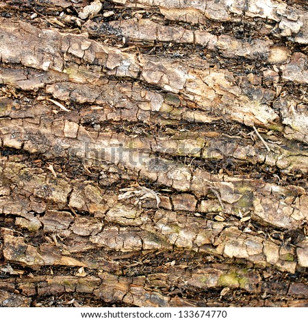Pattern of bark