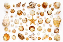 Pattern of exotic sea shells and starfish on a white background. top view. isolated on white
