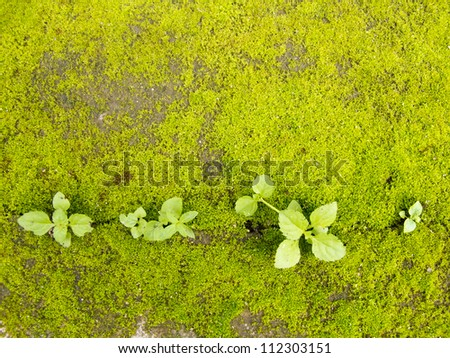 Pattern of green moss on concrete ground with small plant