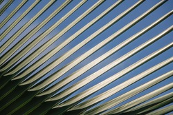 Pattern of palm leaves (unidentified species) in sunlight and shadow in an ornamental garden, west central Florida, USA, for background or element with concepts of symmetry, genetics, illumination