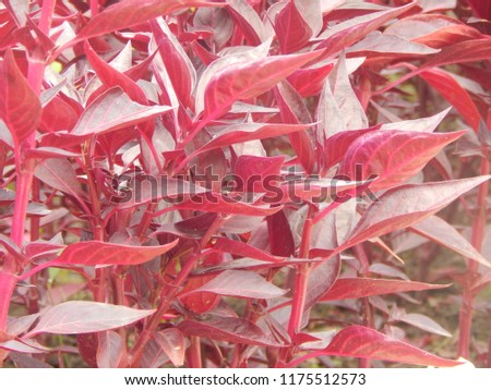 Pattern of plants with red leaves, background #1175512573