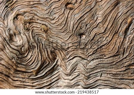 Pattern of tree trunk. #219438517