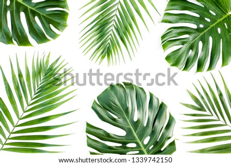Pattern of tropical green leaves monstera on white background. Flat lay, top view