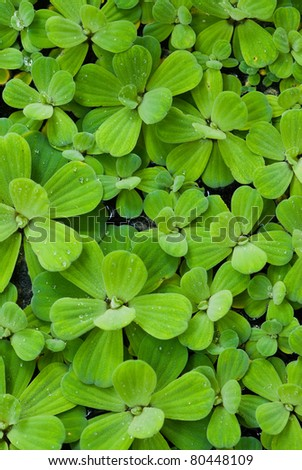 pattern of water plant
