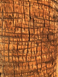 patterned sunlit bark on trees in Los Angeles