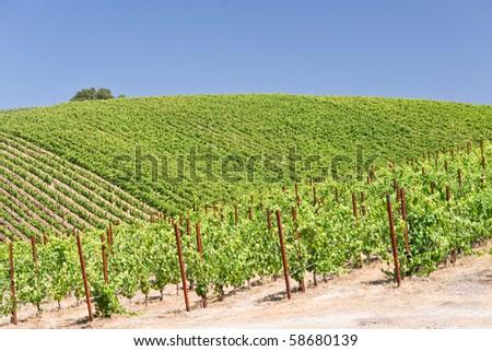Patterns of a hillside vineyard in California - stock photo