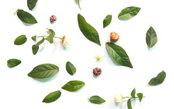 Patterns with leaves, jasmine, white background, lay flat, the top view.