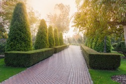 Paved alley in autumn park with hedges of trimmed juniper shrubs and juniper trees on both sides in backlight