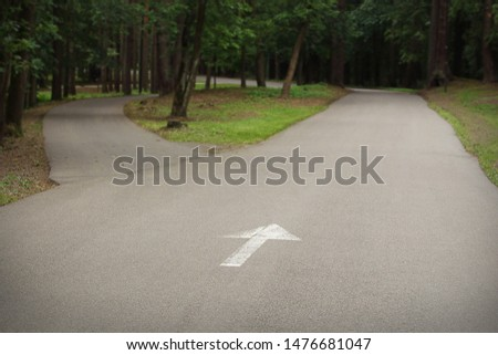 Paved trail in the park splitting into two with white painted arrow with green trees and grass in summer