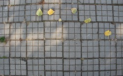 Paving slabs with fallen leaves background, with copyspace