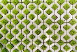 Paving-stone in a lattice shape and green grass in the holes