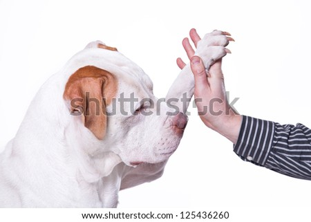 paw and hand - stock photo