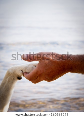 paw in hand (14) human hand and dog paw