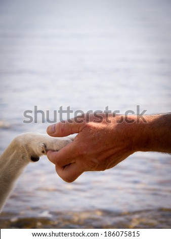 paw in hand (22) human hand and dog paw