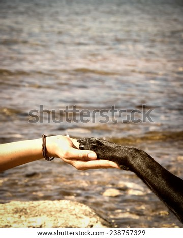 paw in hand  human hand and dog paw