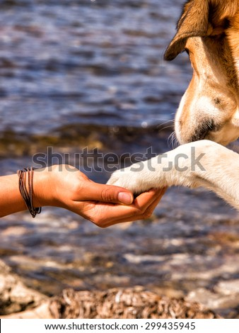 paw in hand, human hand and dog paw