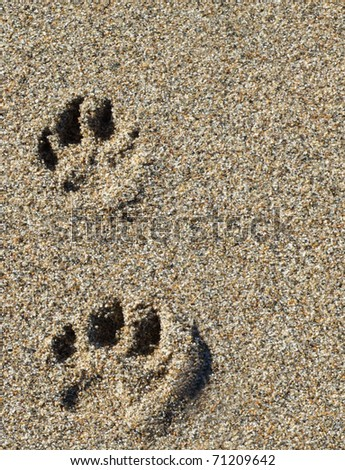 Paw Prints in Sand