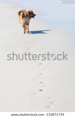 paw prints of a dog along a beach with the blurred dog in the background