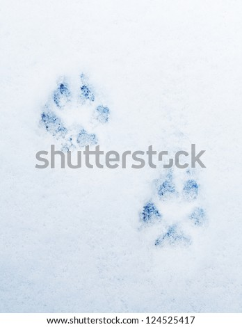 pawprints of a dog on snow