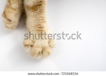 paws cat