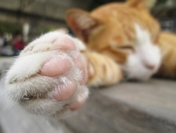 Paws cat close-up