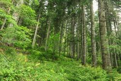Paysage Forêt Montagne La Colline Pittoresques