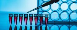 PCR strip in genetic laboratory