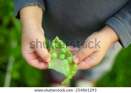 pea child hand kid green organic five pieces