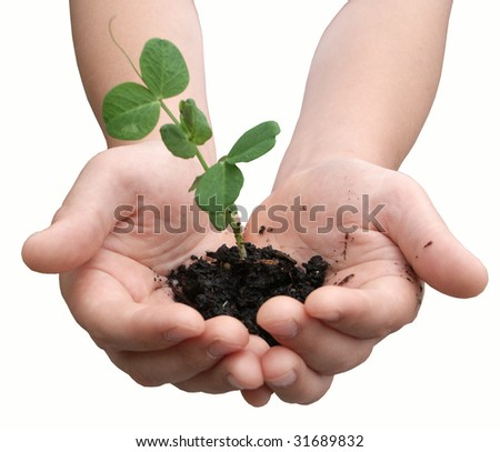 Pea plant in child's hands